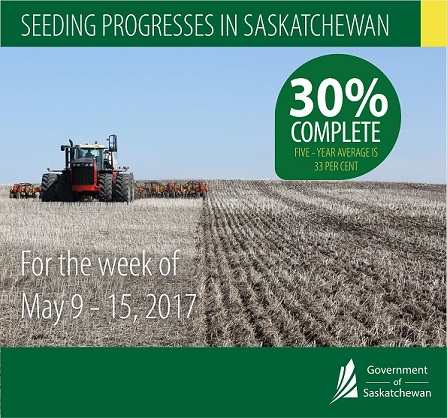 CROP REPORT FOR THE PERIOD MAY 9 TO 15, 2017 | News and Media | Government of Saskatchewan Agriculture SouthWest Saskatchewan  Crops